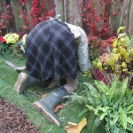 gardening-206687_1280